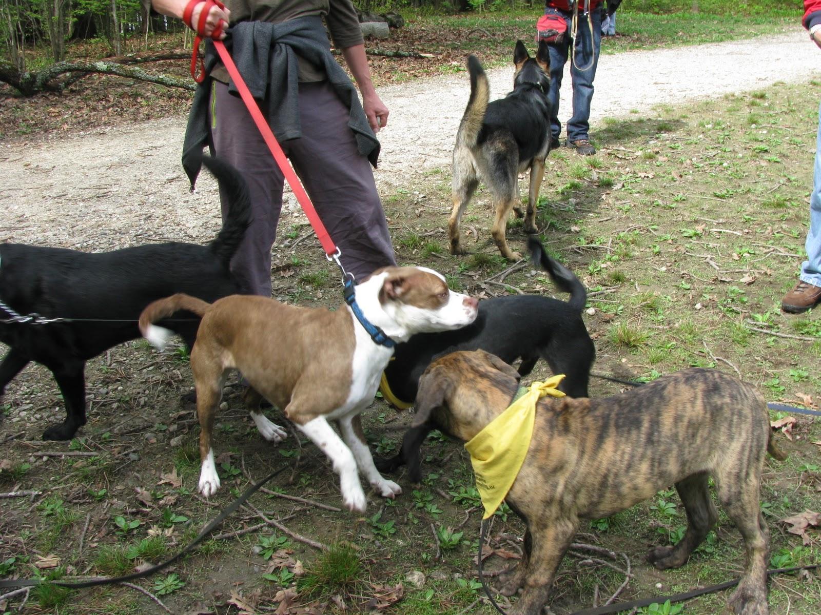 Dog Training Classes Portland Maine