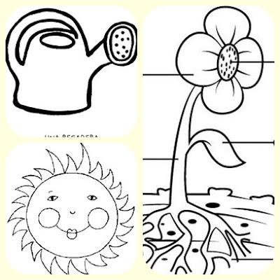 Cuidamos las plantas... | carolina-ofravistabella