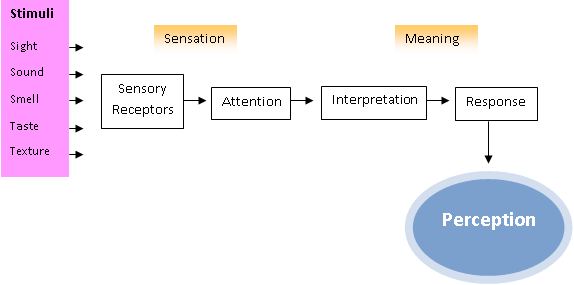 perceptual process After attention is directed at a stimulus array identification of these elements for  further processing and categorization perceptual organizational processes.