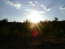 O meu por do sol