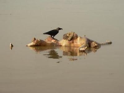 07isiperutkeluar Sungai Gangga Di Penuhi Dengan Mayat Terapung