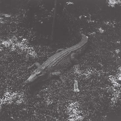 a crocodile in bandung zoo with lubitel 166 u and fuji neopan across 160