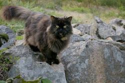 Katten Astrid