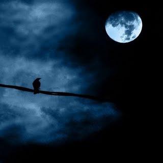Aku Dan Puisi Sang Pungguk Berhentilah Merindukan Bulan