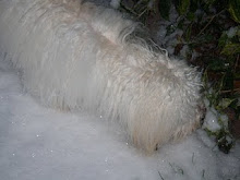♥ Gracie in the snow ♥
