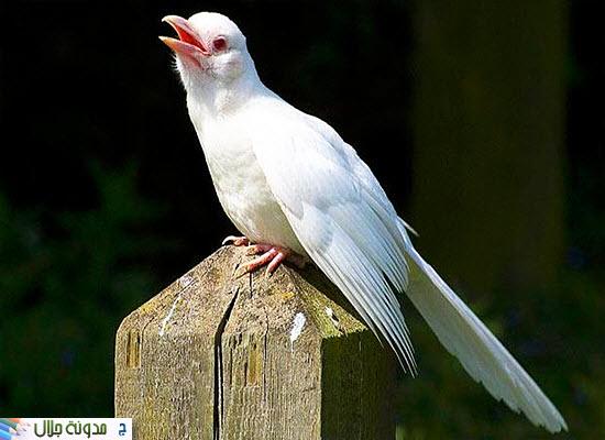 حيوانات ناصعه البياض Forty+albino
