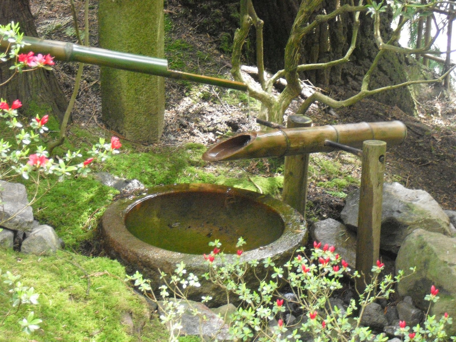 Dreamcicle journeys japanese garden spring blossoms for Japanese bamboo water feature