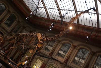 Berlín Přírodověděcké museum - kostra dinosaurus
