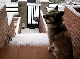 Hunito y la nieve
