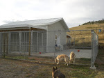 Kennel Building