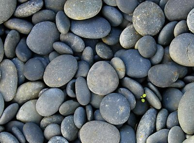 A river of stones get involved for Small river pebbles