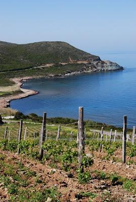 Vignes Cap Corse