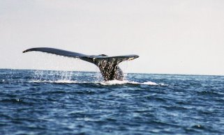 Whalechaser's  Musings