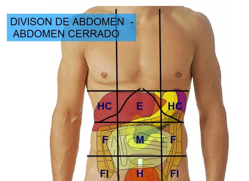 Encantador Anatomía Del Abdomen De Una Mujer Elaboración - Anatomía ...