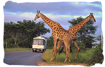 tourist attractions in africa