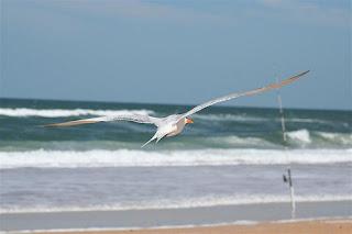 beverly beach florida