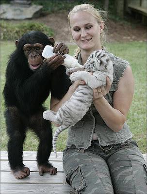 Anjana feeding baby cubs