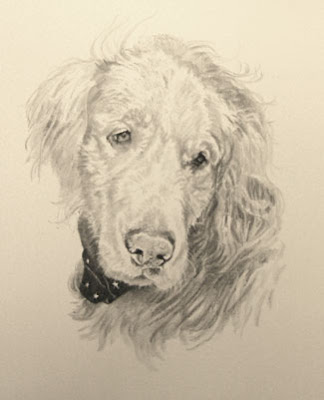 Golden Retriever portrait by Lori Levin