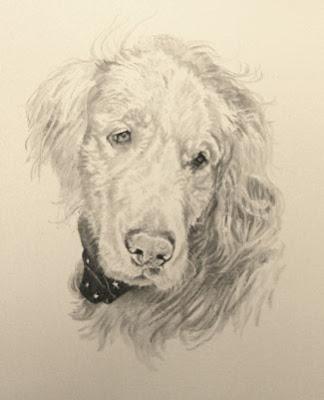 Golden Retriever portrait by Lori Levin