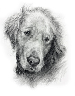 Golden Retriever dog portrait by Lori Levin