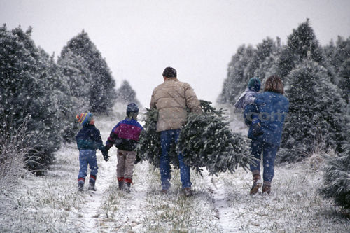 have you ever wanted to choose and cut down your own christmas tree but wasnt sure where to go - Cut Your Own Christmas Tree Farm