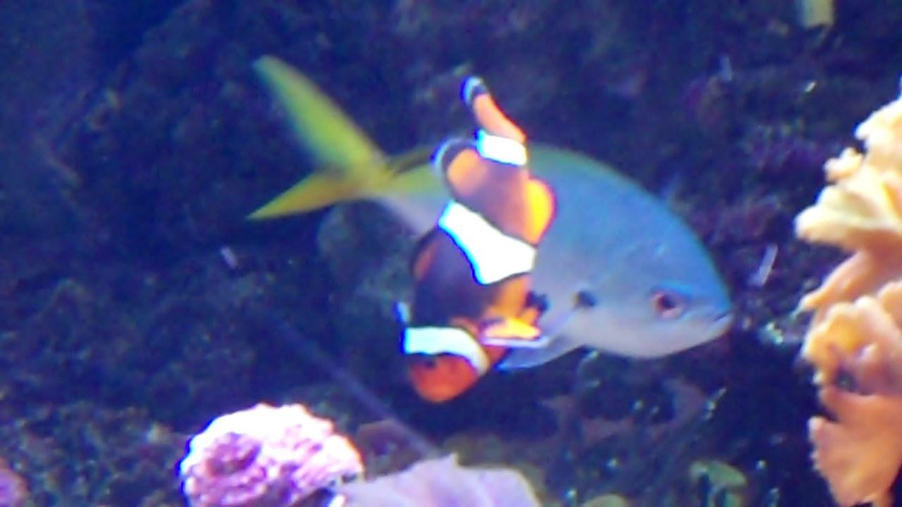 The Living Planet Aquarium Salt Lake Blog