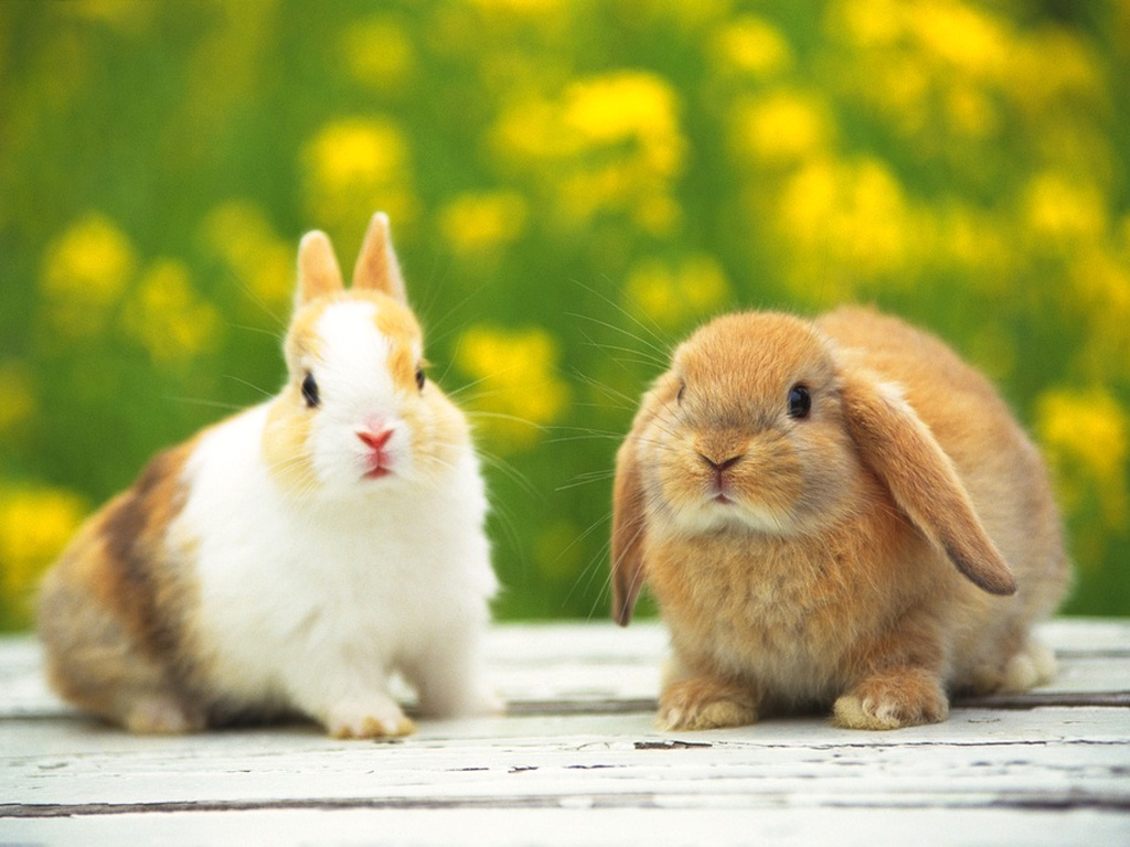 [Image: rabbit30_1024_gldr.jpg]