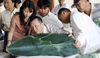 Gem merchants inspect jade