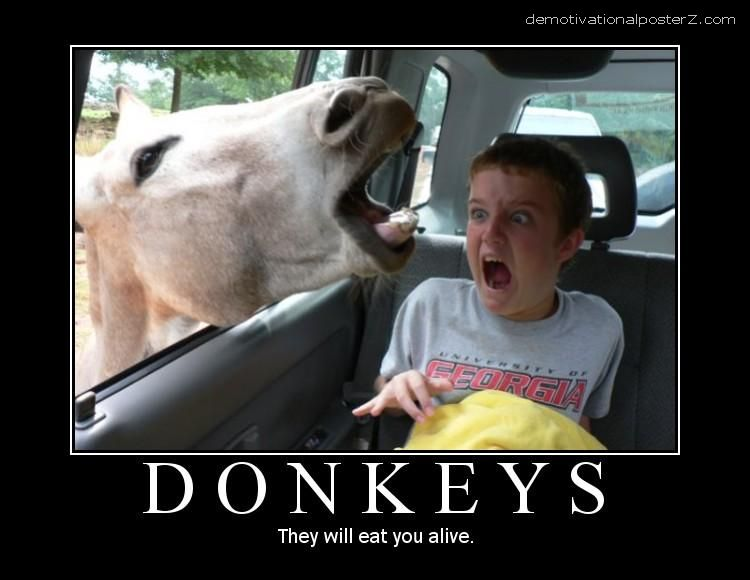 DONKEYS - they will eat you alive