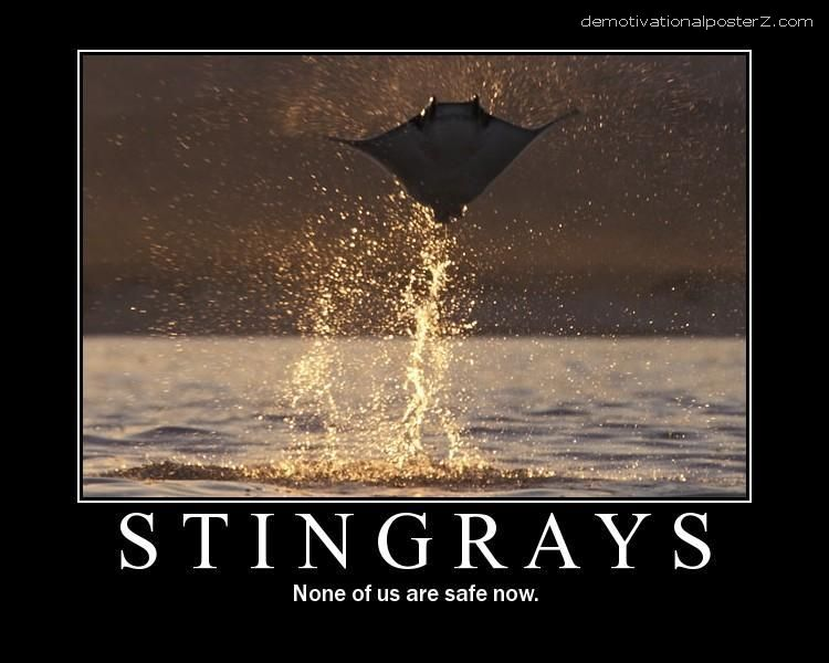 Stingrays - none of us are safe now