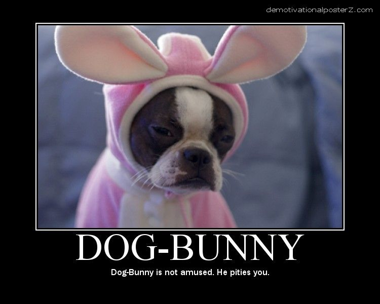 Dog Bunny is not amused