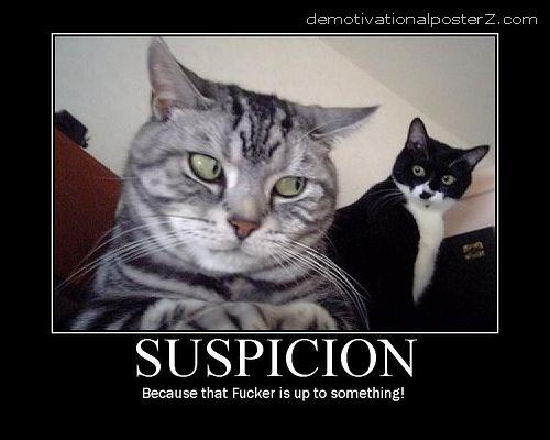 suspicion cat