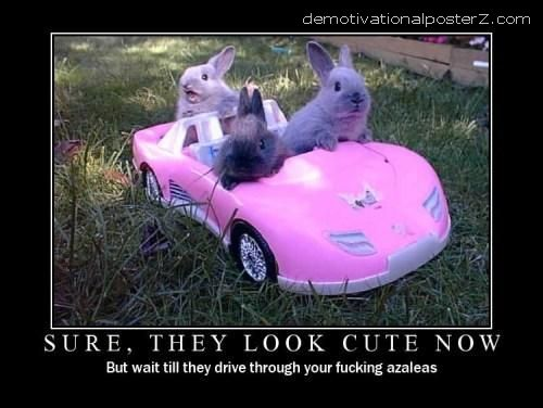 bunnies in a car