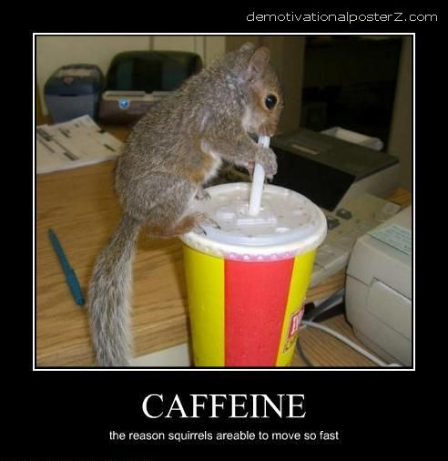 squirrel drinks coffee
