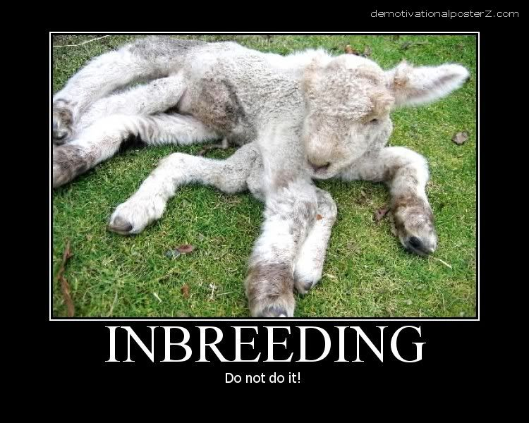 inbreeding don't do it sheep