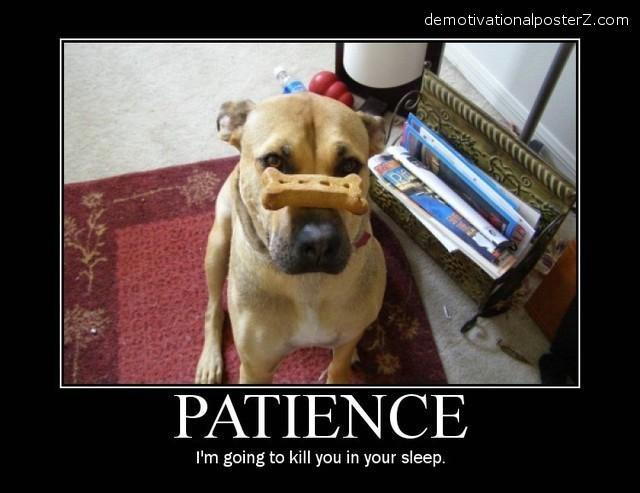 patience dog will kill you in your sleep