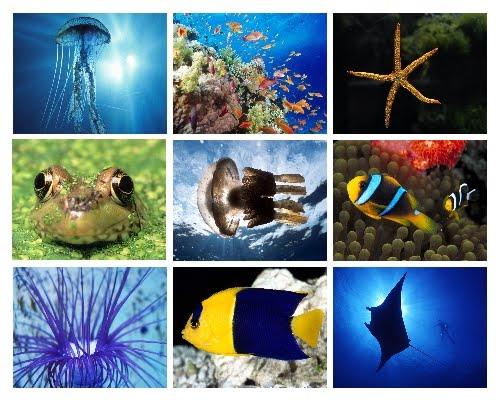 Beautiful deep blue sea animals wallpapers