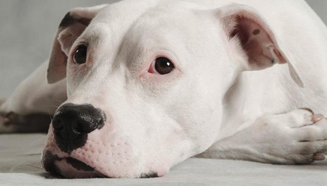 Aventuras y desventuras de un perro llamado Choni