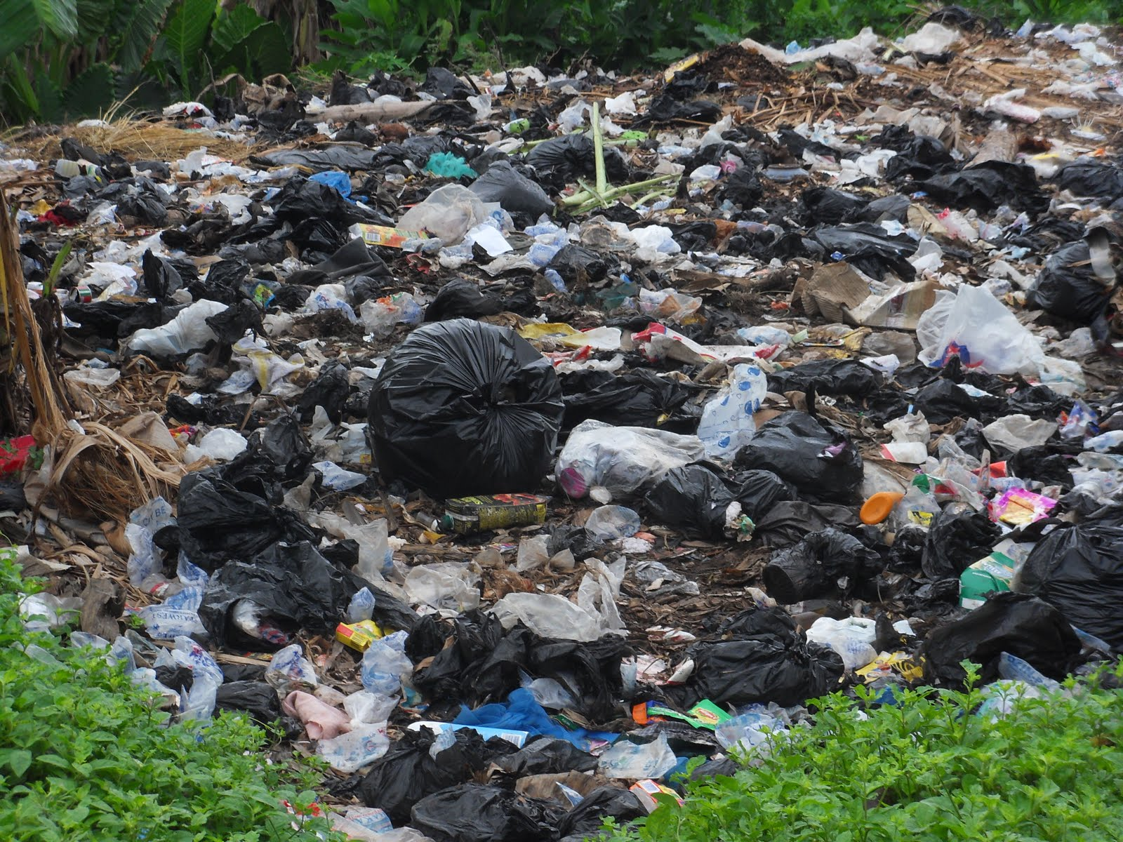 polythene pollution essays Check out our top free essays on polythene pollution to help you write your own essay.