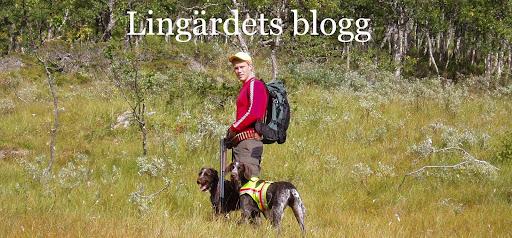 Lingärdets blogg