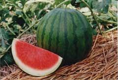 manfaat buah semangka, apakah semangka bermanfaat?, mengobati stroke secara alami