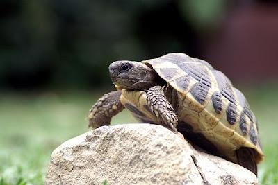 http://1.bp.blogspot.com/_amtU1POy0iU/R8PYzXKqYbI/AAAAAAAACkA/i1Z8CPHiBq0/s400/tortoise.jpg