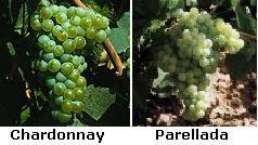 Uvas+Atrium+Chardonnay.JPG