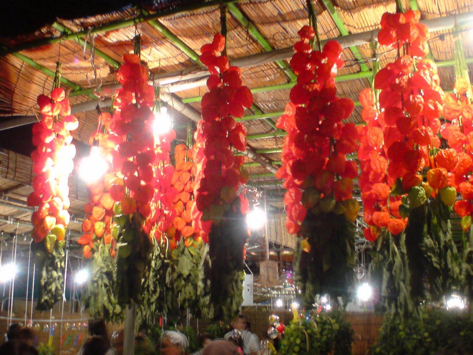 Sophie le berre plantes du japon histoire botanique et culture l 39 amour en cage star du - Amour en cage plante ...