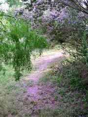 The Fairy Path