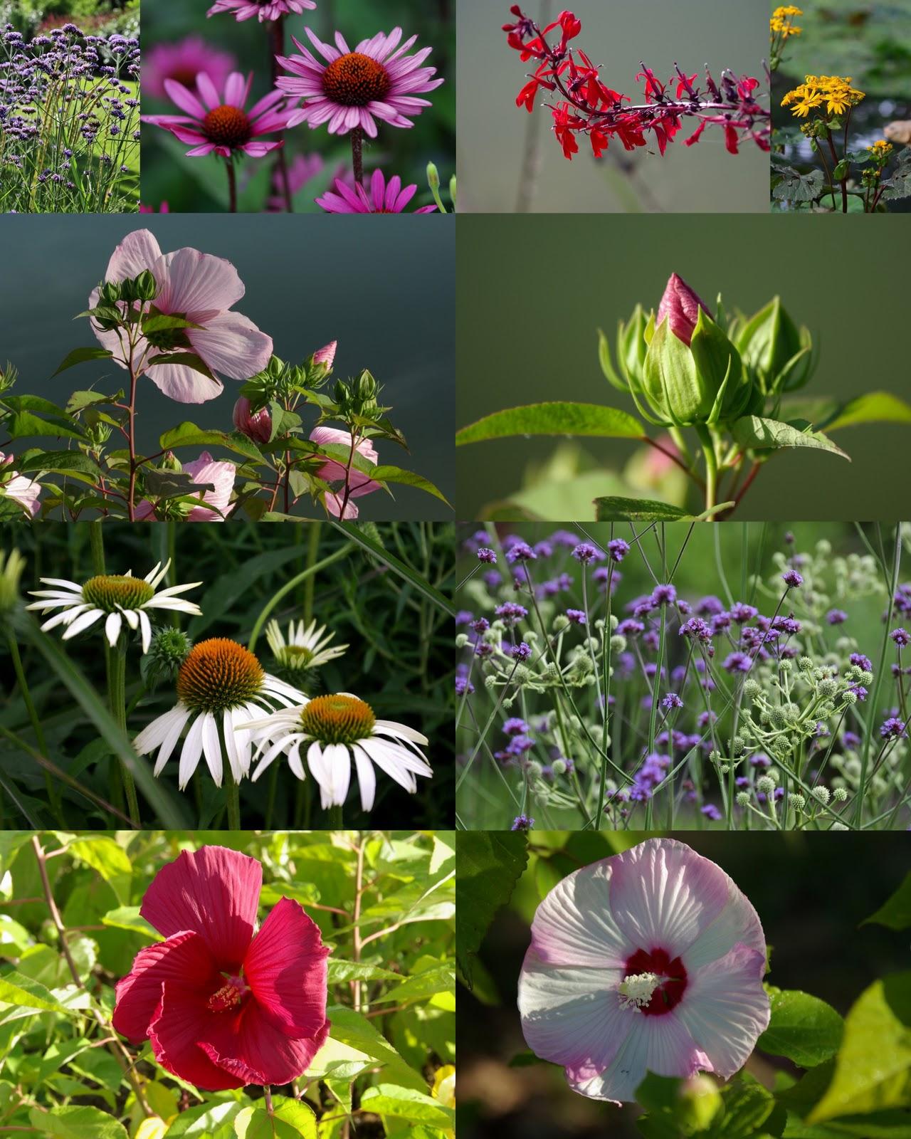 Les jardins de la poterie hillen qu 39 est ce qu 39 une plante for Plante tapissante vivace