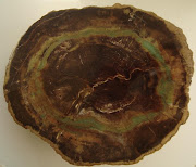 PETRIFIED WOOD ZIMBABWE