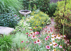 Purple coneflowers and coreopsis