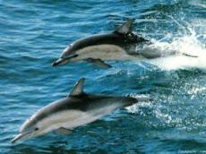 Golfinhos Ilha Grande RJ