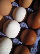 Om våra ägg